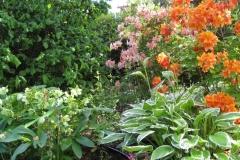 Spring Garden 2012 009