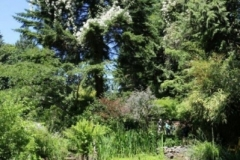 carmen-varcos-garden-1-51562be0384aa9352f2e528e884e0fd18c17b194